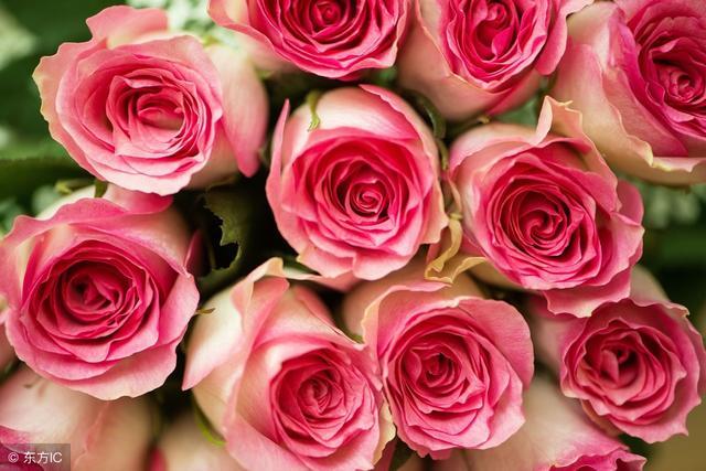 送玫瑰花送不同數字表達不同意思,一見鐘情的意思,為幫助還是拯救,而且它還有由衷的贊賞的意思,一般五支玫瑰花代表著愛你無悔,代表著自從愛上她就無怨無悔,玫瑰支數與寓意,一般五支玫瑰花代表著愛你無悔,純潔的愛的意思,雖然學習中的文生,下次送花就不懵了 - 每日頭條