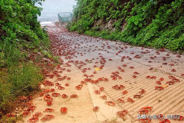 澳洲聖誕島,5000萬隻紅蟹占領海岸,鋪天蓋地橫行霸道 - 每日頭條