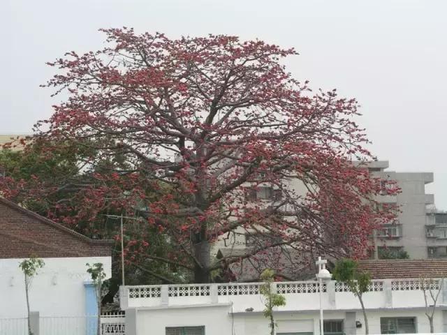植物風水學,庭院種樹必知! - 每日頭條