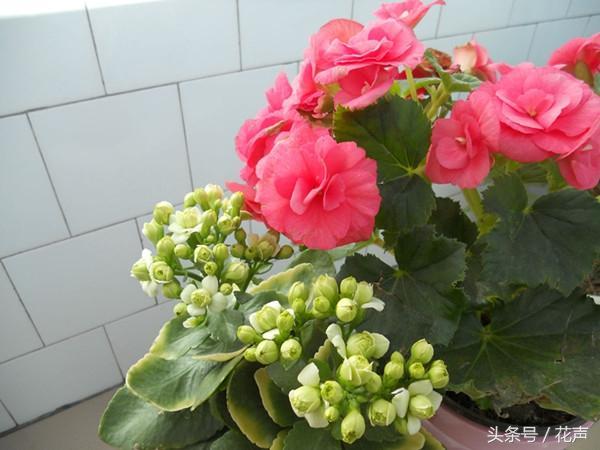 最好養的室內盆栽植物。美觀又能凈化空氣。無需打理一舉多得! - 每日頭條