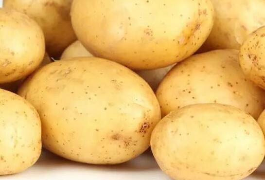 不起眼的小土豆。白癜風患者多吃有好處 - 每日頭條