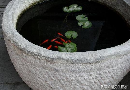 古法養魚之魚盆篇,自帶「充氧」的魚盆,虎頭盆養魚最地道! - 每日頭條
