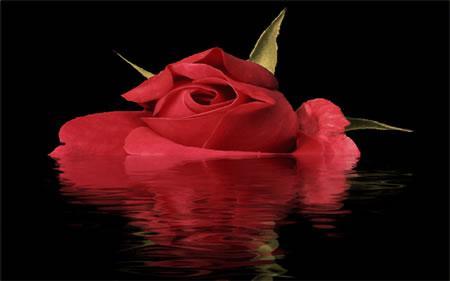 喝玫瑰花水有哪些好處?應注意什麼? - 每日頭條