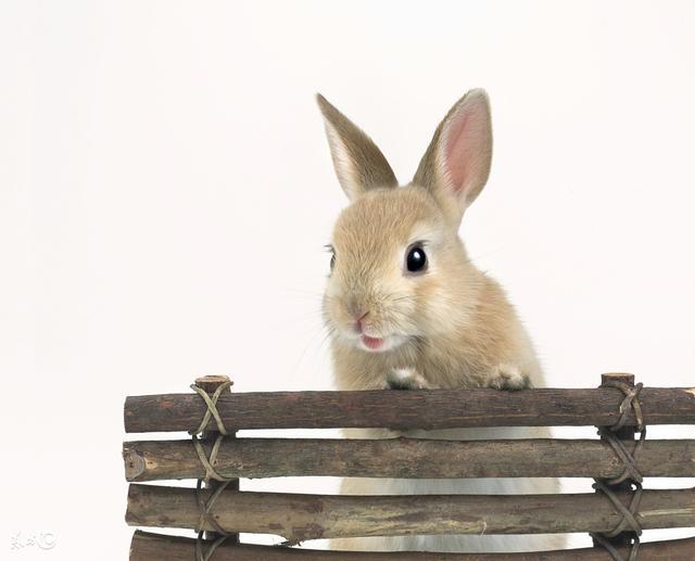 不同年份屬兔的2018整體運勢1951,1963,1975,1987,1999 - 每日頭條