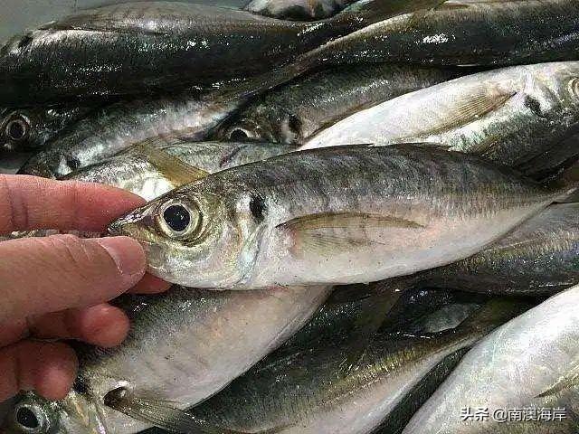 來南澳島玩必吃海鮮,來學下南澳海鮮的本地叫法 - 每日頭條