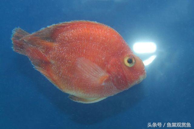 18種觀賞魚常見病及治療(乾貨) - 每日頭條