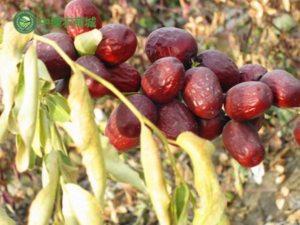 新疆各類紅棗怎麼吃好,三招吃到正宗新疆灰棗 - 每日頭條