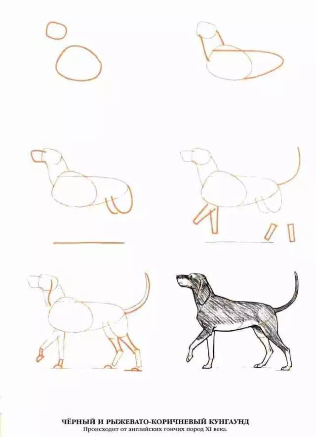 畫畫 | 521畫筆表達愛~分步驟的50種狗狗的畫法 - 每日頭條