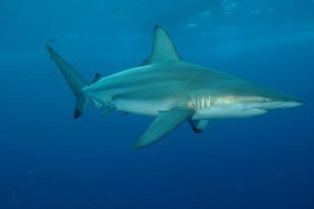 用不著對鯊魚談之色變,真正對人有威脅的只有這十幾種 - 每日頭條