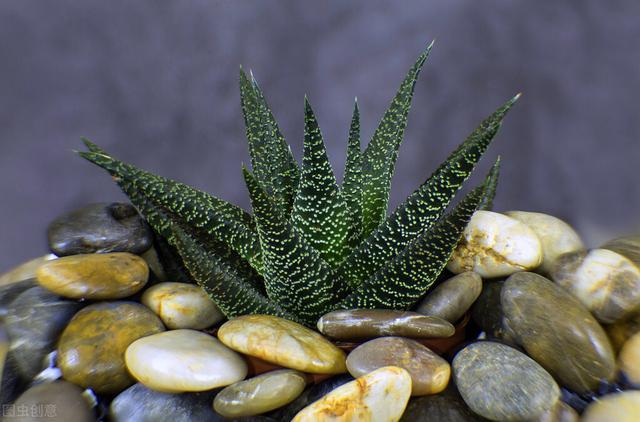 立秋。新手不知養哪種植物?不妨看看這4種。養護簡單。枝丫挺拔 - 每日頭條