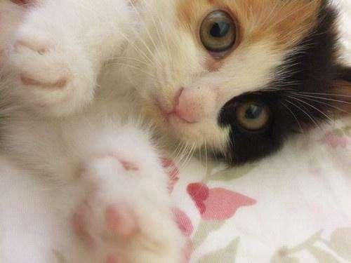 如何辨別喵星人的公母?95%的公貓是左撇子! - 每日頭條