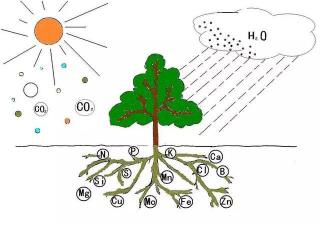 標準果園土壤管理,要知道有機質的作用與增加途徑 - 每日頭條