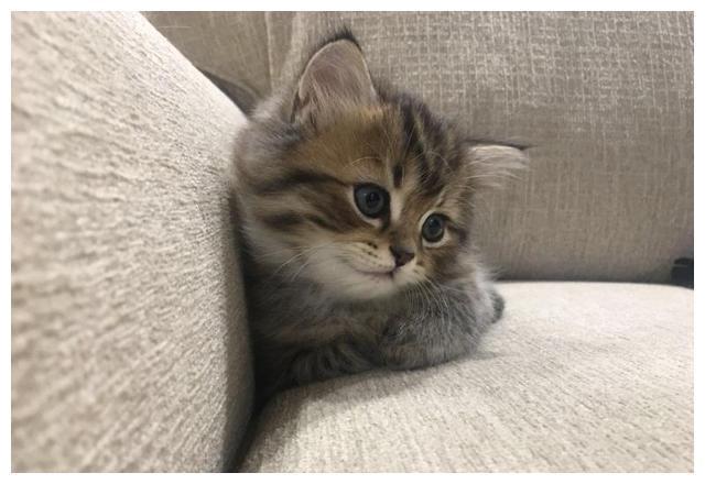 養公貓好還是養母貓好?深度解析 - 每日頭條