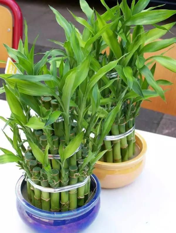 19種簡單易養的室內植物,生長很是輕鬆 - 每日頭條