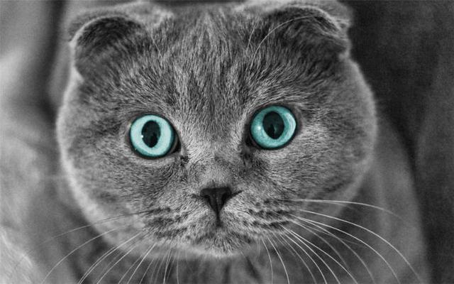 什麼才是正確的擼貓姿勢。貓的哪些反應代表它很享受呢? - 每日頭條