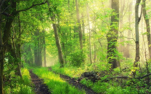 森林是綠色的銀行,是人類的搖籃 - 每日頭條