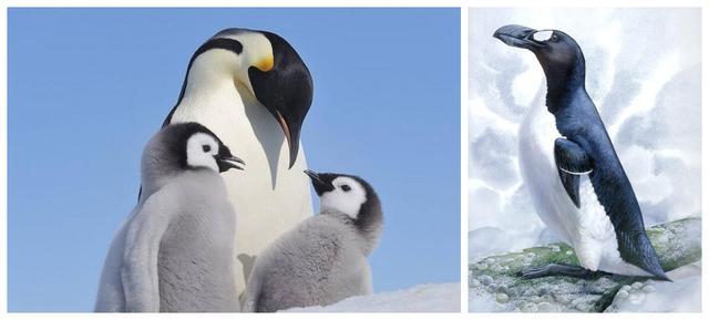 企鵝為什麼在南極而不在北極? - 每日頭條
