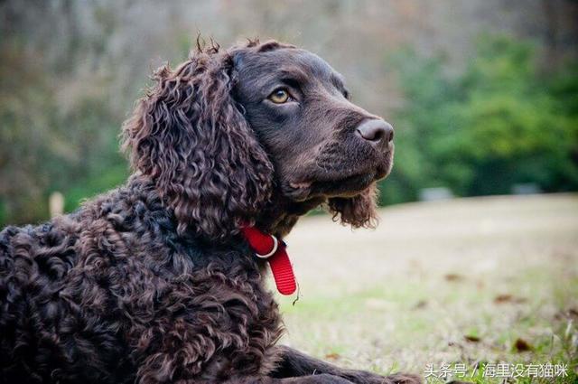 養什麼品種的狗呢?來看看這幾個問題,說不定就有答案了 - 每日頭條