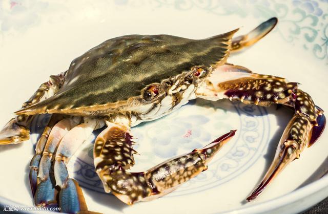 中藥材梭子蟹 - 每日頭條