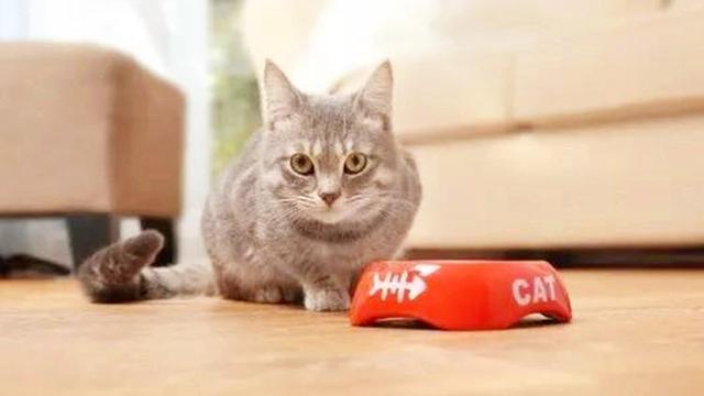 餵貓有講究,貝克 ),奶爸們的餵食攻略查好了嗎? - 每日頭條