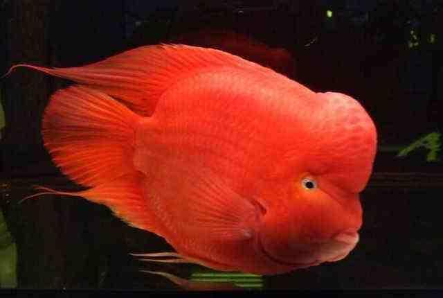 風水魚有哪些 風水魚的種類 - 每日頭條