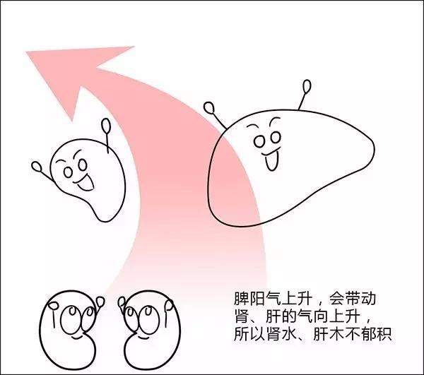 大漫中醫系列-身體基礎調理-脾胃 - 每日頭條