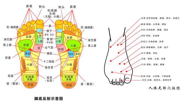 人體足部穴位圖,腳底反射示意圖 - 每日頭條