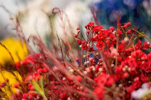 春節給家換個樣。一束年宵花就搞定了。 - 每日頭條