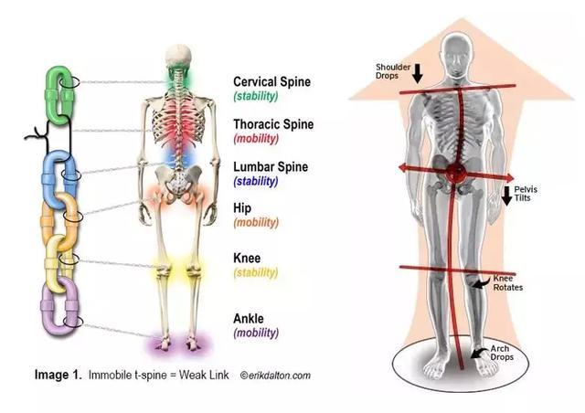 跑步的下肢生物力學分析 - 每日頭條