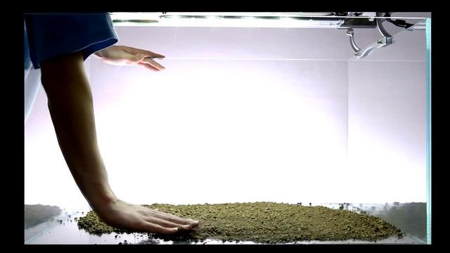 無需CO2的草缸造景。新手開缸就選這個了 - 每日頭條