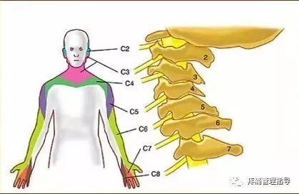 頸肩疼痛原因與預防 - 每日頭條