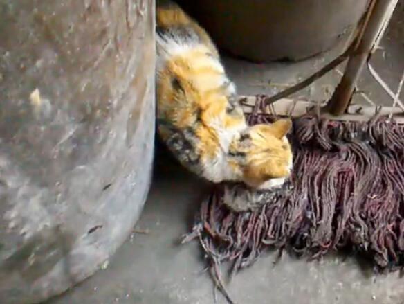 悲劇!母貓生下小貓後。叼一隻小貓失蹤了。找到時它正在吃小貓 - 每日頭條