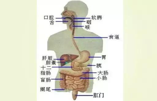 「健康」中年體質差、易生病、老得快?80%只因身體缺少這種東西 - 每日頭條
