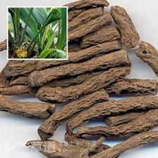 仙茅這個中藥 為啥被唐明皇視為宮廷禁方,現在常治療更年期 - 每日頭條