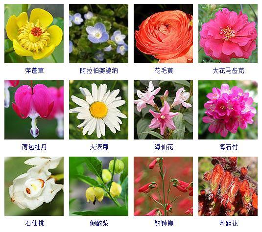 盤點花期在春季的200多種花!來承包一座花園可好! - 每日頭條