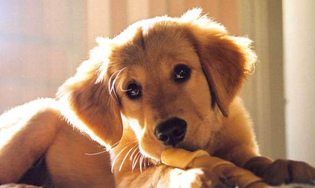 狗狗嘔吐的病因以及治療措施(乾貨!) - 每日頭條
