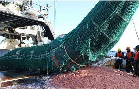日媒:中國過度捕撈南極磷蝦破壞生態!中國:冤死的鯨魚怎麼說? - 每日頭條