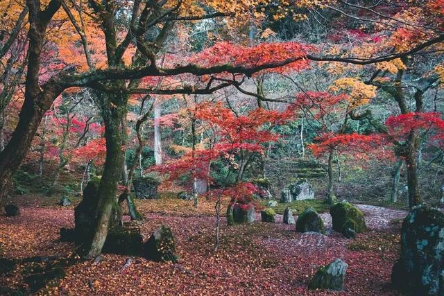 收藏丨日本紅葉狩名所推薦下集 - 每日頭條