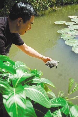為什麼喜歡拿烏龜來放生。你所不知道的冷知識! - 每日頭條