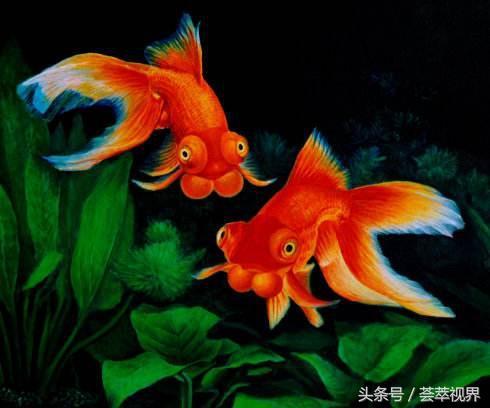 金魚主要的品種有那些,看完這些相信你會收穫很多 - 每日頭條