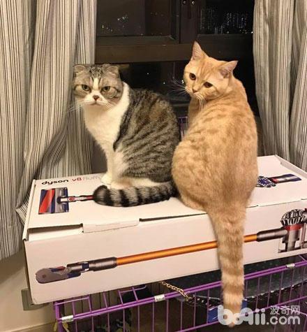 2貓咪原本很恩愛的 自從公貓做完絕育 母貓的態度就變成這樣了 - 每日頭條