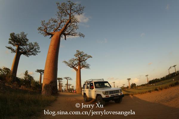(馬達加斯加)神奇的「生命之樹」猴麵包樹(穆隆達瓦) - 每日頭條