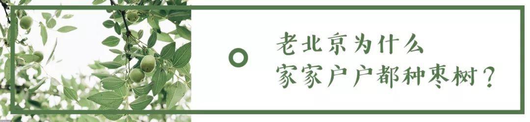 老北京為什麼家家戶戶都種石榴樹? - 每日頭條
