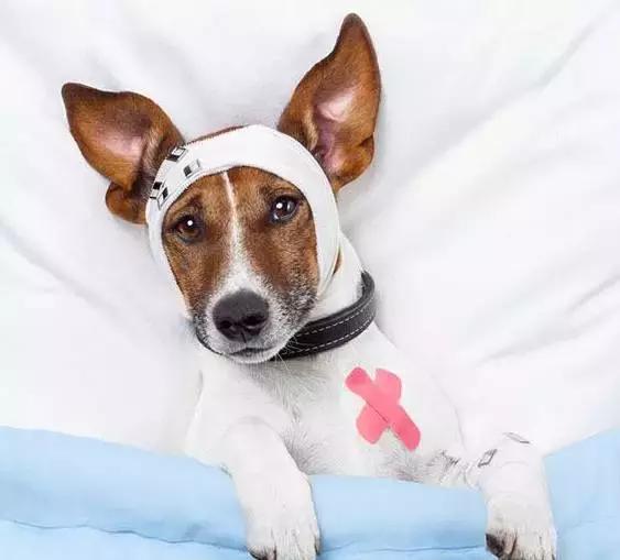狗狗中毒怎麼辦?這樣做也許可以救狗狗一命 - 每日頭條