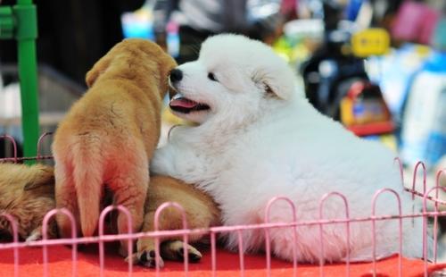 狗狗像果凍狀的稀便便。還帶血絲 - 每日頭條