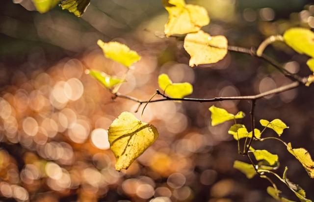 「詩詞鑑賞」乍驚節序又秋分,遇見最美的秋分詩詞 - 每日頭條