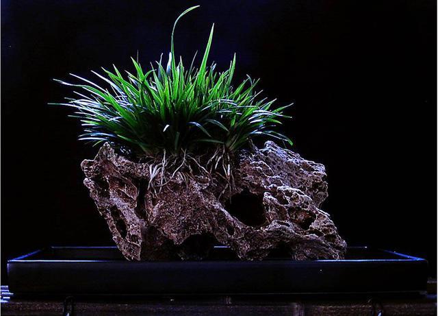 植物的養護手冊 第二篇「菖蒲篇」 - 每日頭條