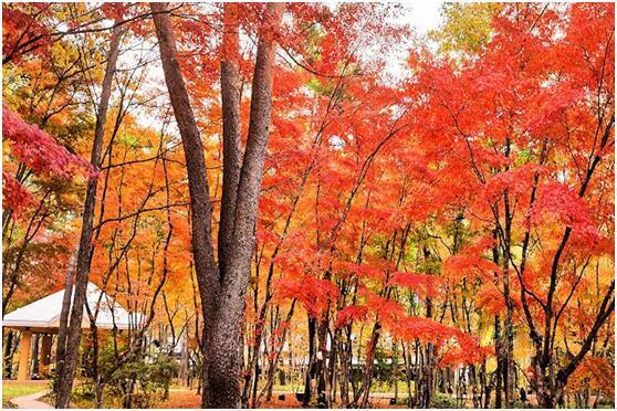 島國人民都去哪裡賞紅葉?——日本紅葉狩景點推薦 - 每日頭條