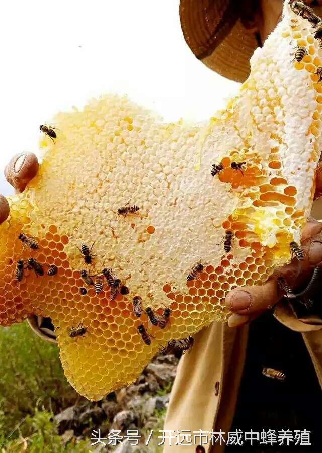 真蜂蜜為什麼會變酸? - 每日頭條