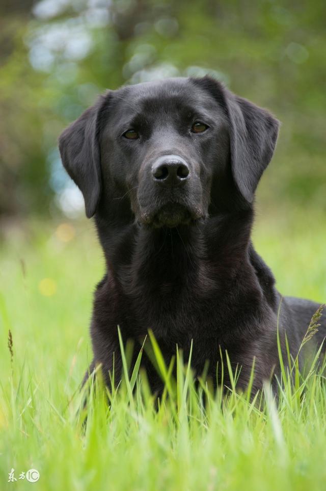 十二個月份,屬狗人「最命苦」的出生月份,看看你家有屬狗的嗎?別騙自己了,準的可怕 - 每日頭條